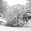 Снегопад помешает нобелевским лекциям?